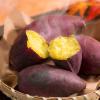秋の味覚【サツマイモ編】/おいしいサツマイモの選び方や保存方法は?